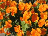 f:id:AssamEarlgray:20070504080322j:image