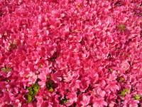 f:id:AssamEarlgray:20070505091006j:image