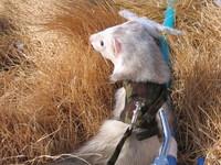 f:id:AssamEarlgray:20080210131410j:image