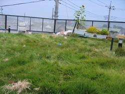 f:id:AssamEarlgray:20080802212644j:image