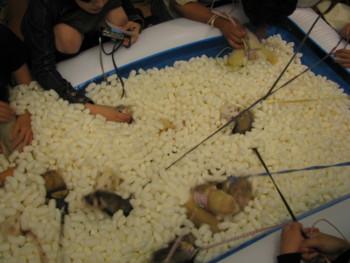 f:id:AssamEarlgray:20081012202243j:image