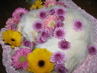 お花に囲まれるルフナ